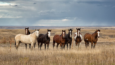 Prairie States Travel