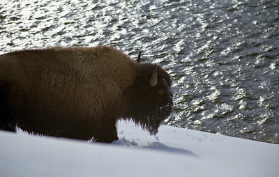 1991: Winter: Yellowstone