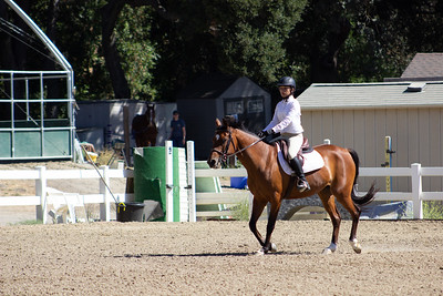 Short Stirrup/Rusty Stirrup & Beginner