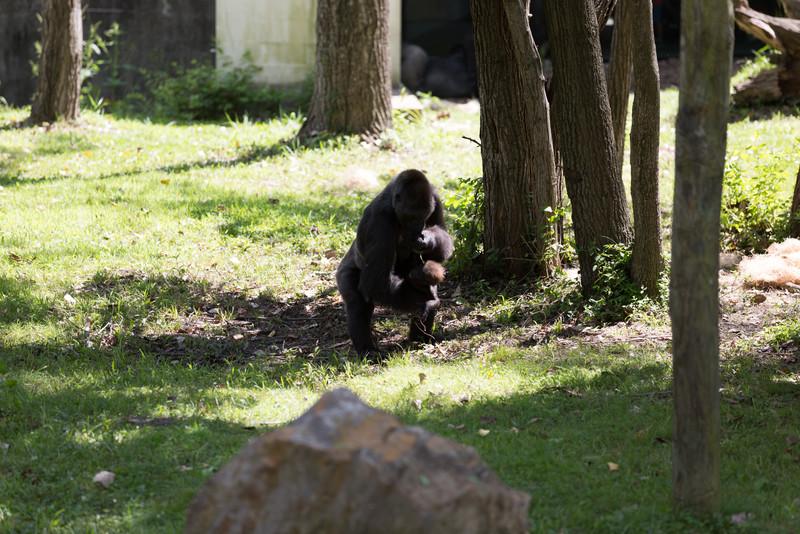 2015_08_20 Kansas City Zoo 046.jpg