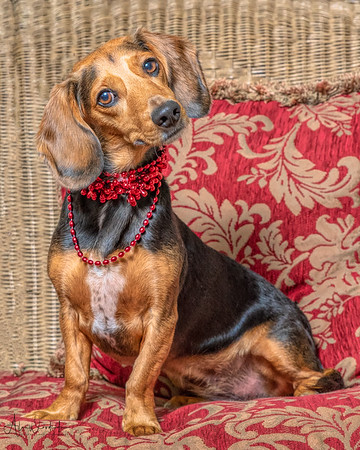 Lucy - September Pet of the Month