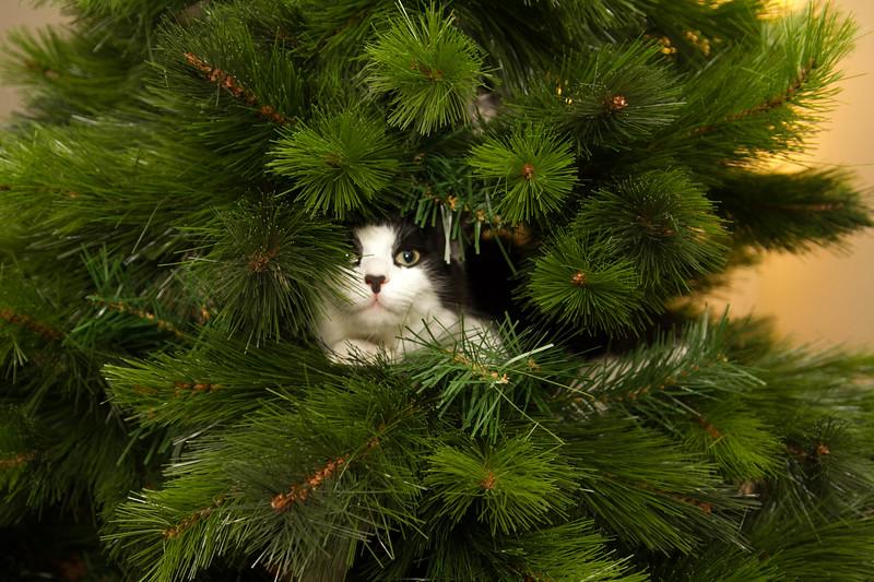 Christmas Day 2012-7094.jpg