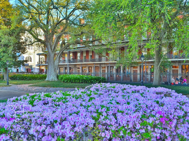 French Qtr 1 + Floral 134.JPG