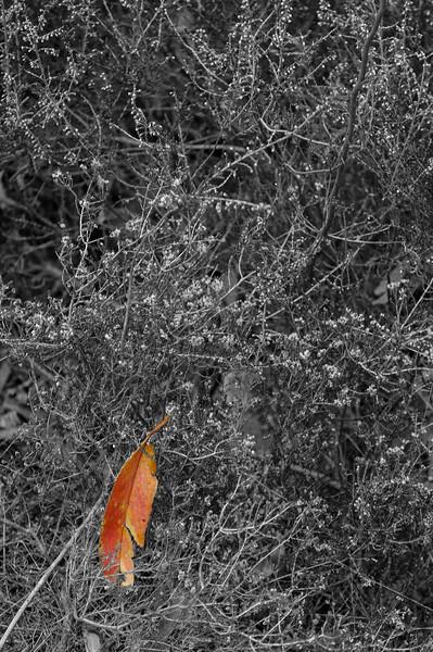 Vouzela-PR2 - Um Olhar sobre o Mundo Rural - 17-05-2008 - 7460-1.jpg