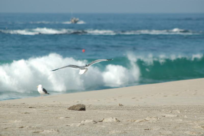 gulls (4).JPG