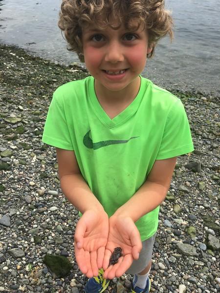 crabby crabbers