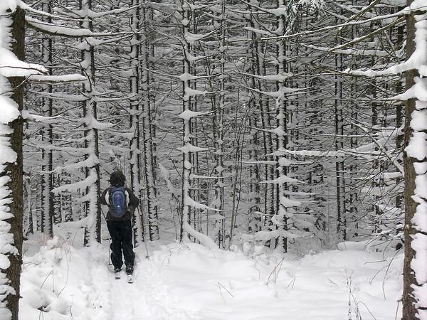 Frozen Canaan Valley, WV 2007