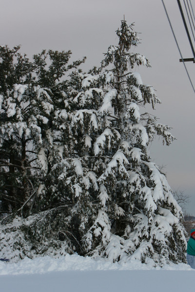 snow 2010 feb IMG_2387 (16).JPG