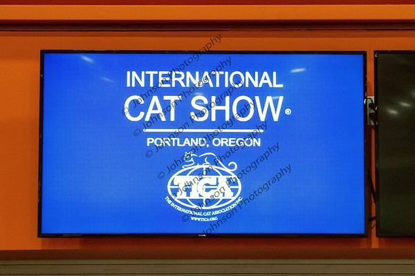 TNCC - International Cat Show Portland OR 2019 Candids