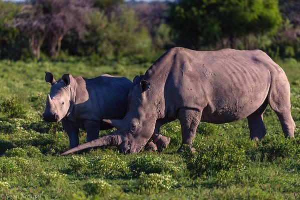 Big 5 Safari 2016 - S. Africa, Zimbabwe, Botswana