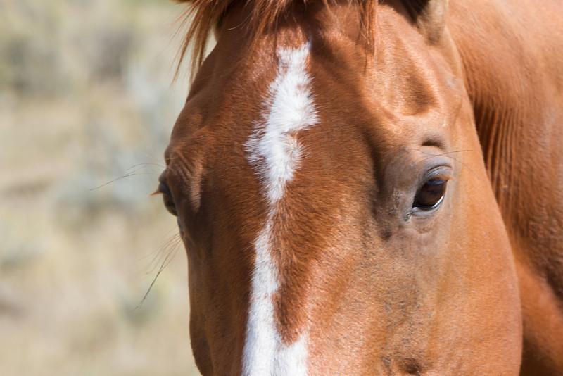03_Little Big Horn_Montana-46.jpg