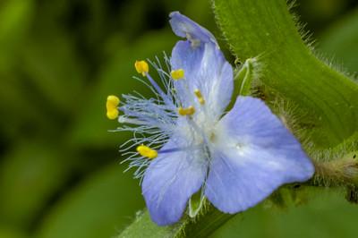 Flora - Kentucky