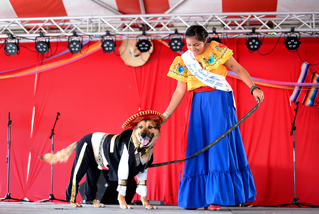 . The 2013 San Gabriel Mission Queen Francella Fierro, 17,  enters her dog Lou, dressed as a Mariachi, into the pet costume contest during their 242nd Annual La Fiesta de San Gabriel Saturday, August 31, 2013 at the San Gabriel Mission. The 10-year-old German Shepherd Rottweiler mix also received a blessing during the Blessing of the Animals by Father Lambert Okere. The fiesta runs through Sunday. (Photo by Sarah Reingewirtz/Pasadena Star-News)