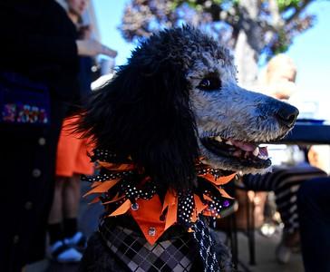 Poodle Day Carmel 2016