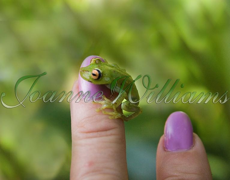 _P1E1102#5 frog.jpg