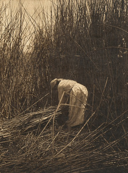 Gathering tules - Lake Pomo (The North American Indian, v. XIV. Norwood, MA, The Plimpton Press, 1924)