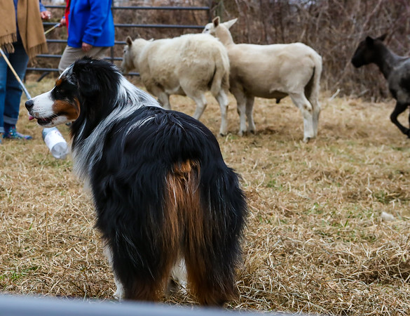 Dink Herding Seminar Valparaiso IN March 2019