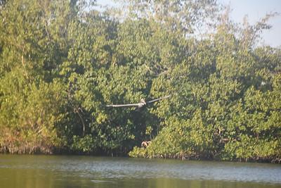 Sunset Bird Rookery Kayak Tour - Bartlett & Hilger
