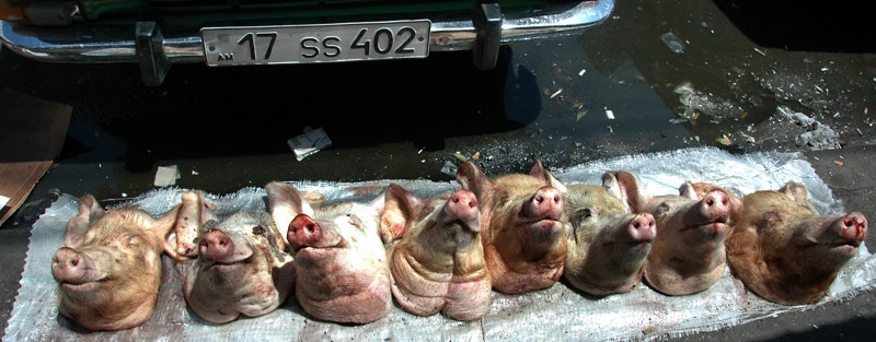 Pigs' Heads Lined Up at Market - Yerevan, Armenia