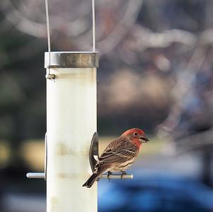 17-046 Birds & Squirrel Feb-Mar Susan