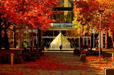 Video Canberra Autumn