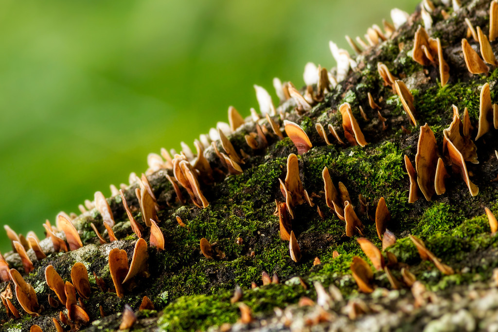 IMAGE: http://alfredomora.smugmug.com/Landscapes/General-Landscapes/i-8JVsMKm/0/XL/20120512-mushroom-city-001-XL.jpg