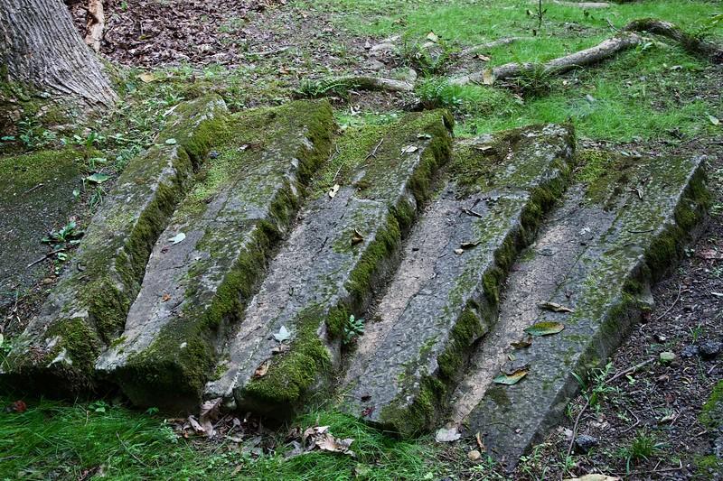 moss steps forest.jpg