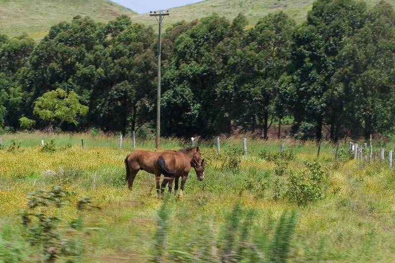 Easter Island Horses 1.jpg