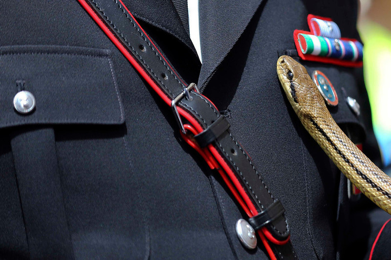 . A snake slides on a Italian Carabiniere during the St. Domenico procession in Cocullo, central Italy May 1, 2013. Every year in May, snakes are placed onto the statue of St. Domenico and the statue is then carried in a procession around the town. St. Domenico is believed to be the patron saint for people who have been bitten by snakes.  REUTERS/Alessandro Bianchi