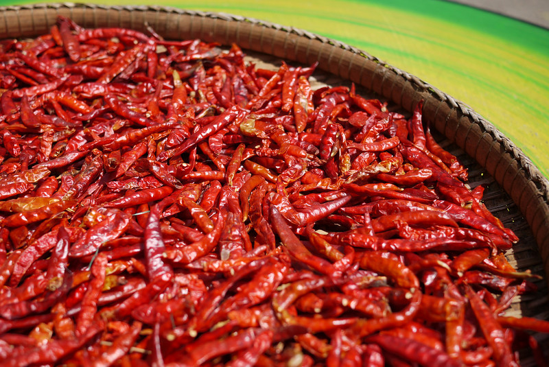 Chili peppers drying in the strong Thai sun.