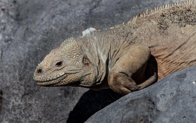 Galapagos_MG_4860.jpg