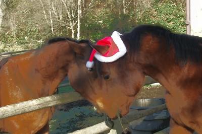 Murphy and his Santa hat