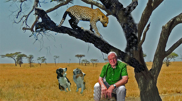 Attenborough.GaWy_650x360.jpg