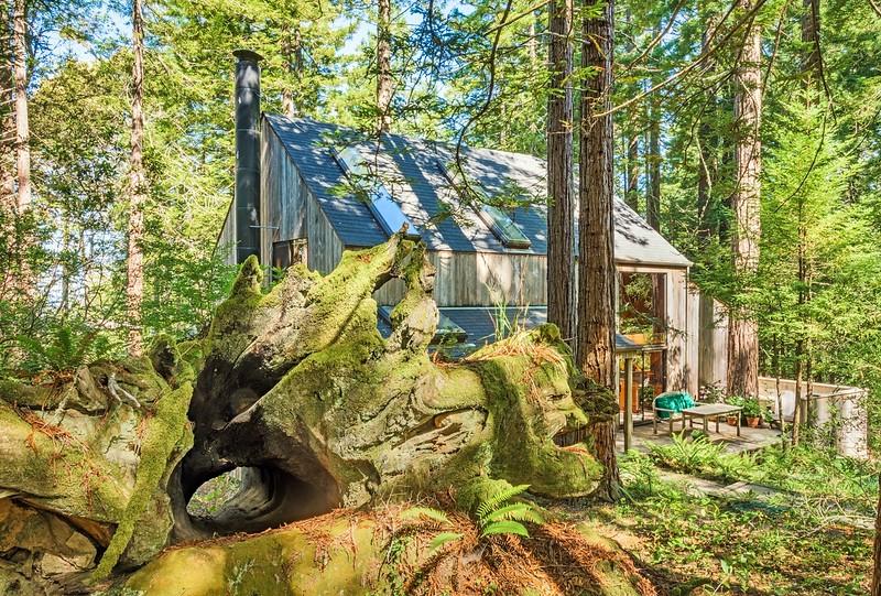 Old Redwood Stump & Binker Barn
