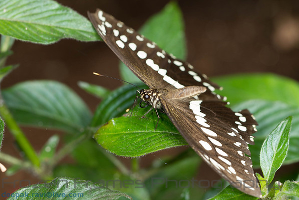 Butterfly Place - Westford - Aug 2013