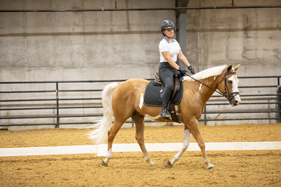 Horse 178