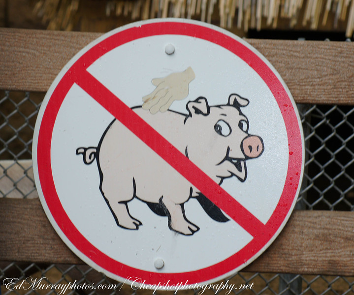 Do Not Rub the Pig's Back