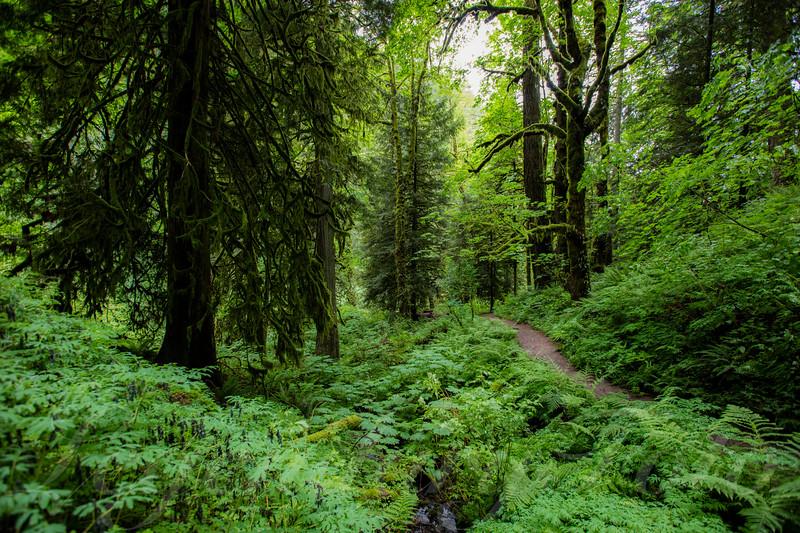 Latourell Falls Trail