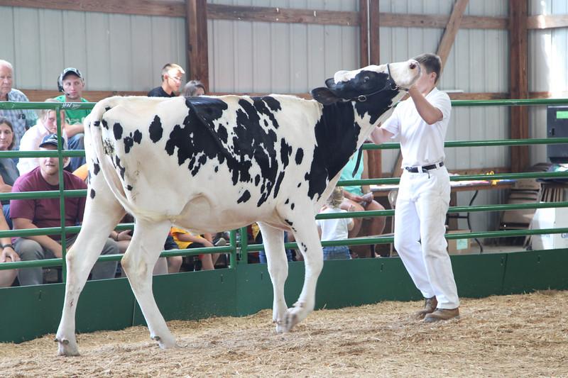 DairyShow-5.jpg