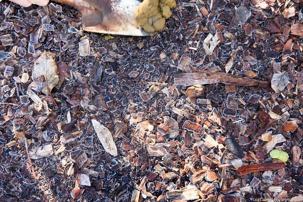 Mushrooms and Lichen