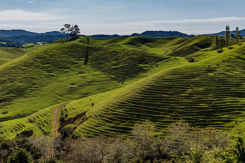 Reisterrassen in Neuseeland?