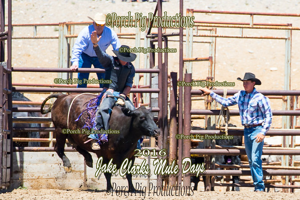 Wild Cow Riding Jake Clarks Mule Days 2016 Rodeo