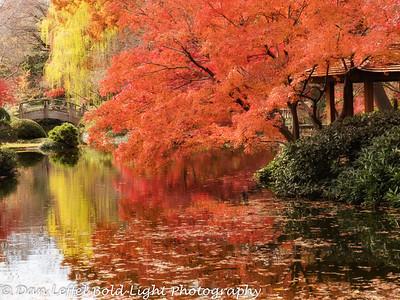 Ft Worth Japanese Gardens Autumn