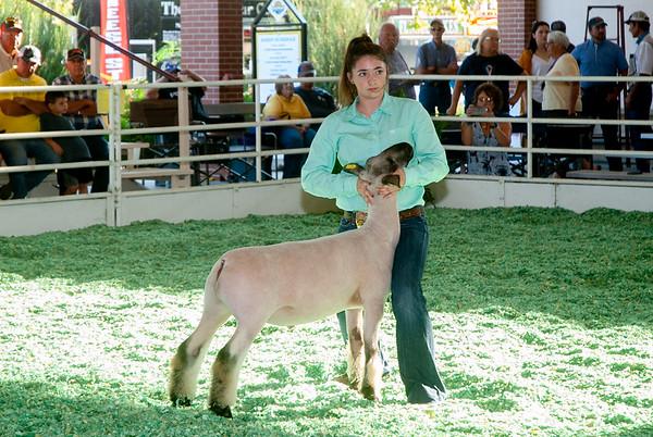 Kansas State Fair Lambs 9/7/2019