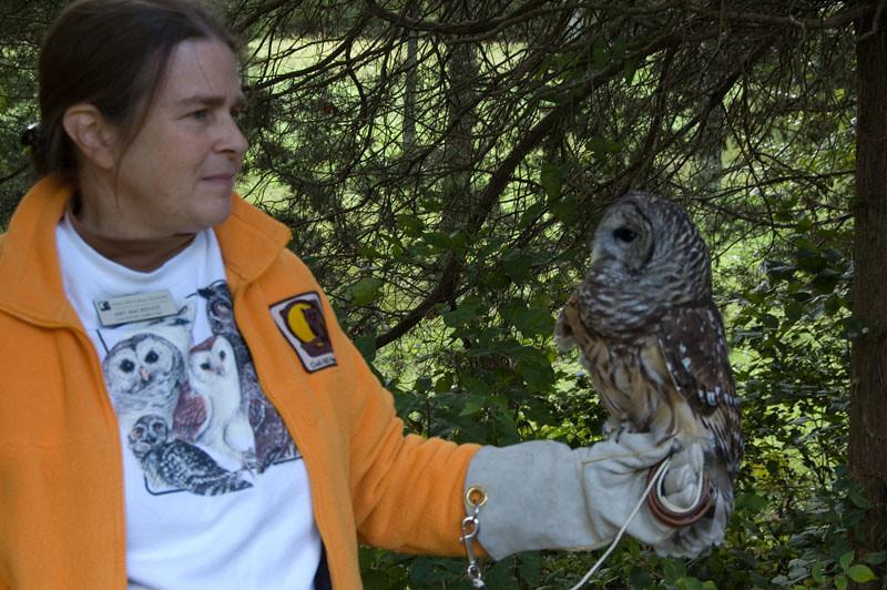 Volunteer with Barred Owl
