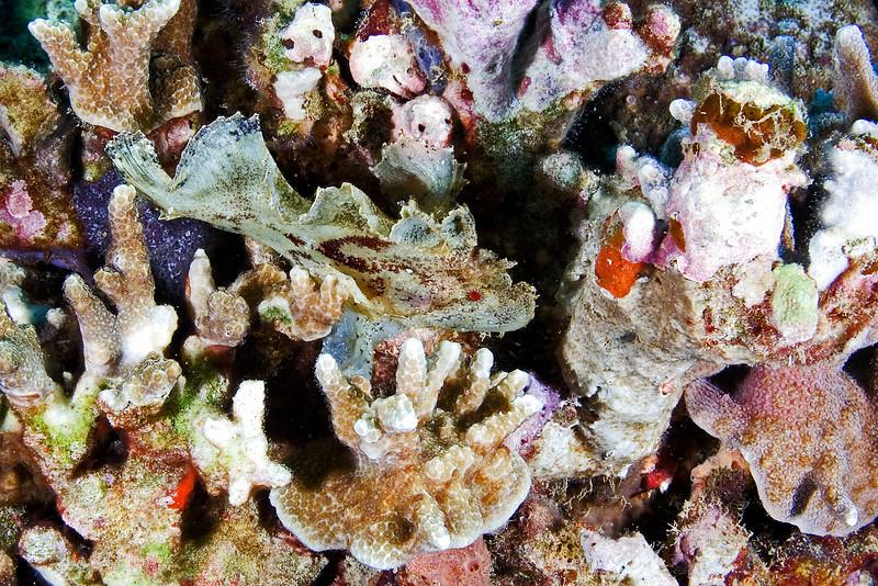 White Leaf Fish 1.jpg
