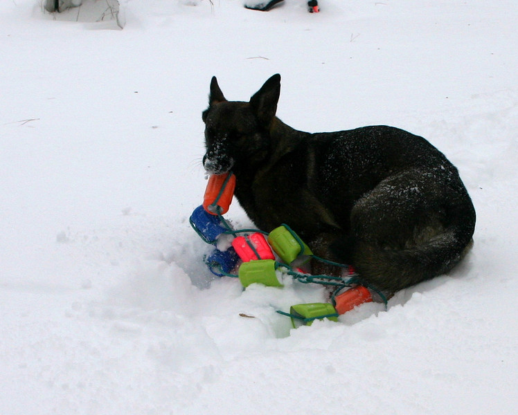2009.12.9 Blizzard Brita yard (16).JPG
