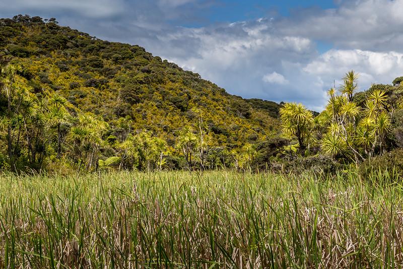 Auf dem Whangaruru Reserve Track