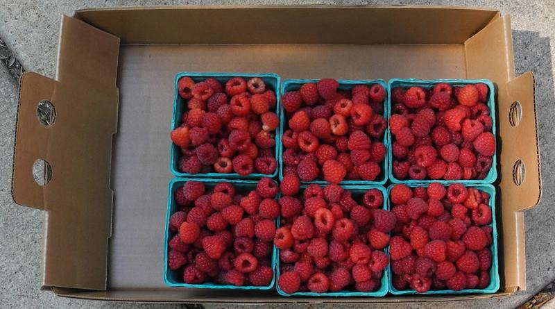 The rasberries. Yum!