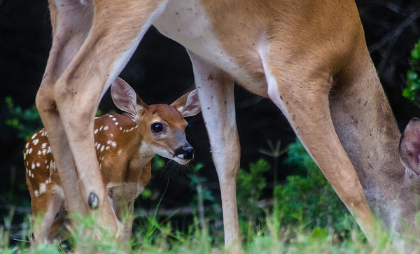 2013-Deer